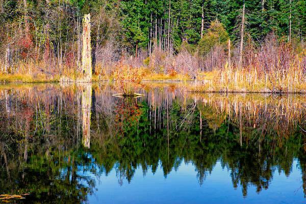 Kittitas County Wall Art - Photograph - Bull Frog Pond - Kittitas County - Washington - October 2013 by Steve G Bisig