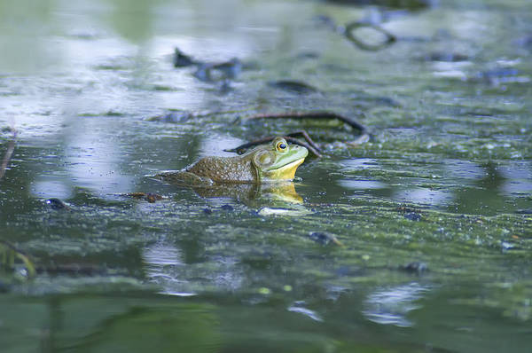 Bull Frog Photograph - Bull Frog Pond by Bill Cannon