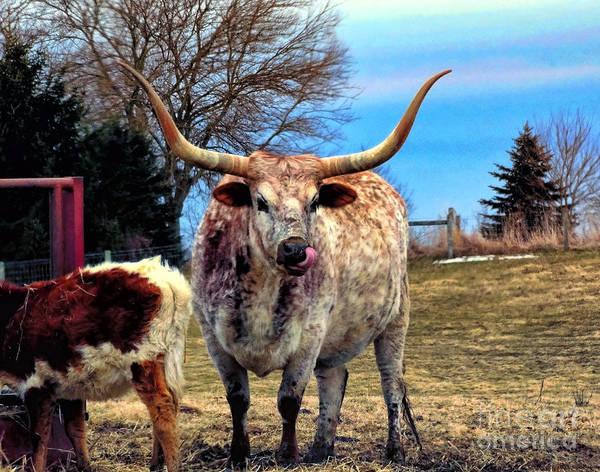Digital Art - Bull Horns by Gena Weiser