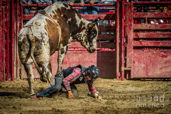 Photograph - Bull Rider In Trouble by Eleanor Abramson