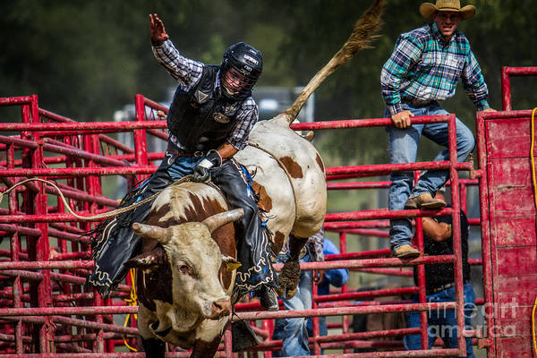Photograph - Bull Rider Western Cowboy Rodeo by Eleanor Abramson