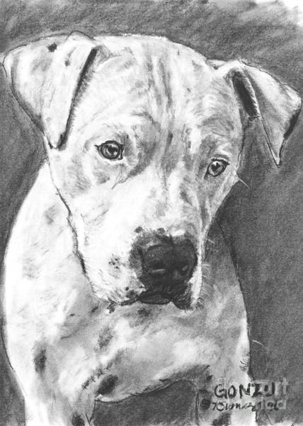 Art Print featuring the drawing Bull Terrier Sketch In Charcoal  by Kate Sumners