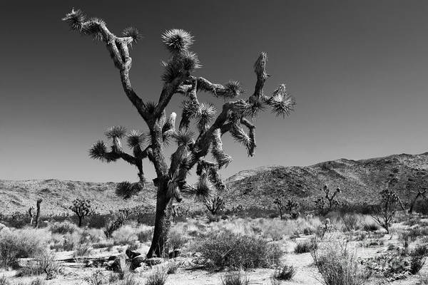 Mojave Photograph - Bullet The Blue Sky - Joshua Tree N.p by Henk Meijer Photography