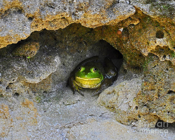 Bullfrog Photograph - Bullfrog Burrow by Al Powell Photography USA