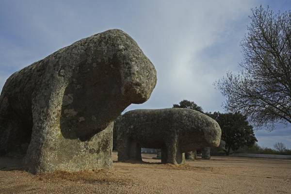 El Toro Photograph - Bulls Of Guisando. 3rd Bc. Spain. El by Everett