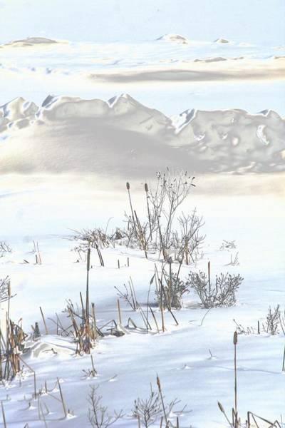 Bulrushes In Snow Art Print by Carolyn Reinhart