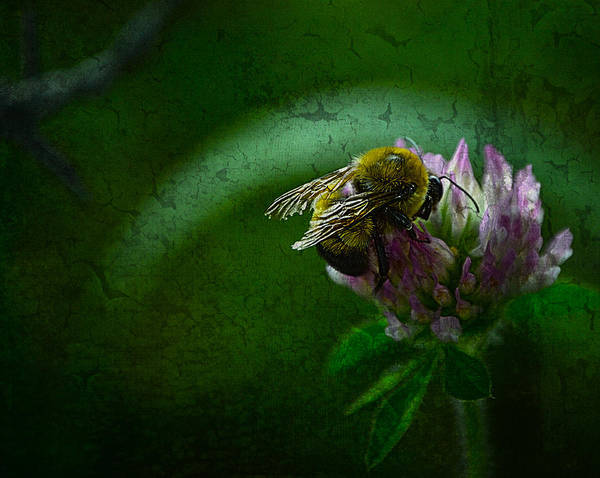 Bumble Bee Tattered Wings Art 2 Art Print