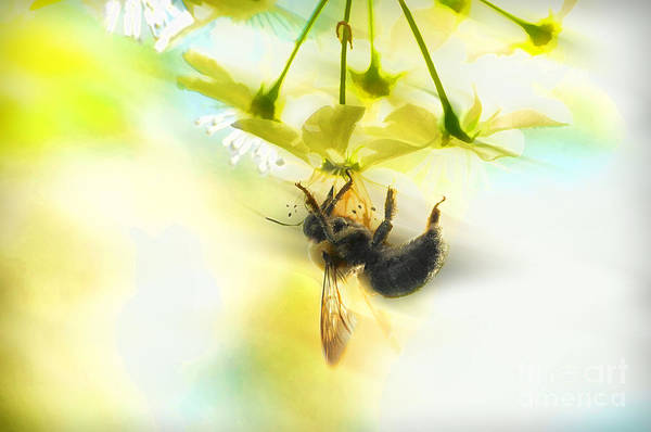 Photograph - Bumble Going In For The Nectar by Dan Friend