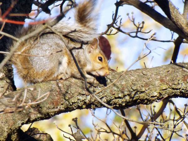Photograph - Bumpy The Squirrel by Robyn King