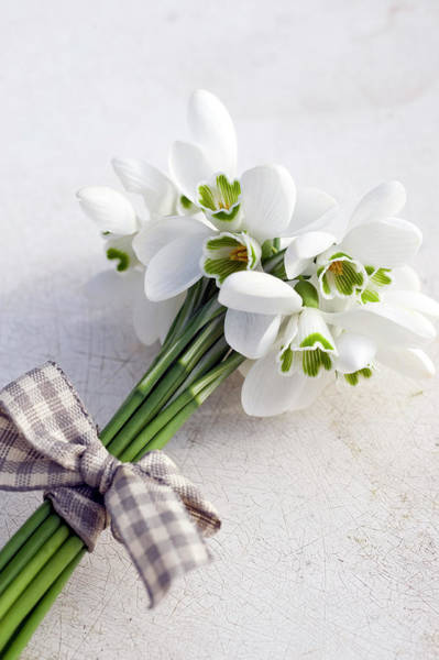 Snowdrops Wall Art - Photograph - Bunch Of Snowdrops Galanthus Nivalis by Juliette Wade