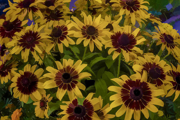 Digital Art - Bundle Of Daisies by Photographic Art by Russel Ray Photos