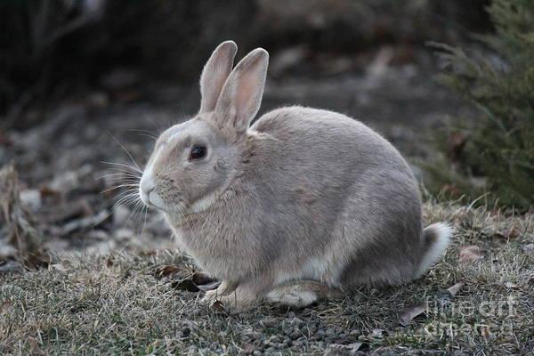 Photograph - Bunny by Ann E Robson