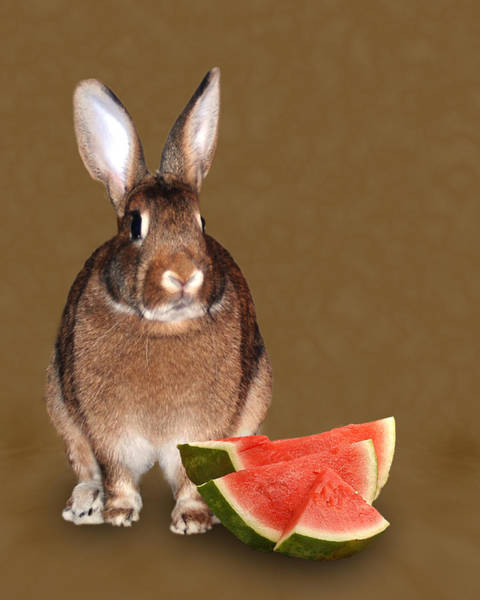 Watermellon Wall Art - Photograph - Bunny Snack by Diane Bell