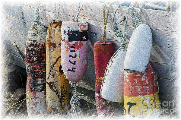 Photograph - Buoys Hanging On Boat by Dan Friend