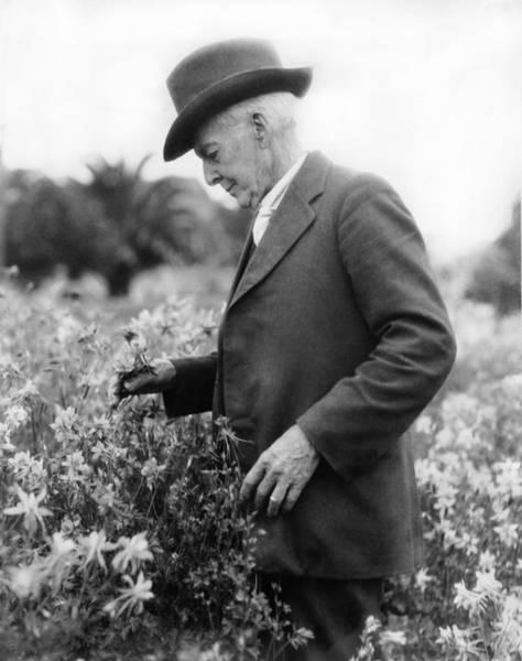 Santa Rosa Photograph - Burbank And Shasta Daisies by Underwood Archives