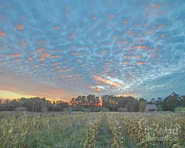 Baton Rouge Digital Art - Burden Rural Life Center Center Cornfield Baton Rouge Louisiana by Lizi Beard-Ward