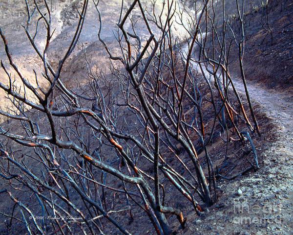 Photograph - Burned Hiking Trail by Richard J Thompson