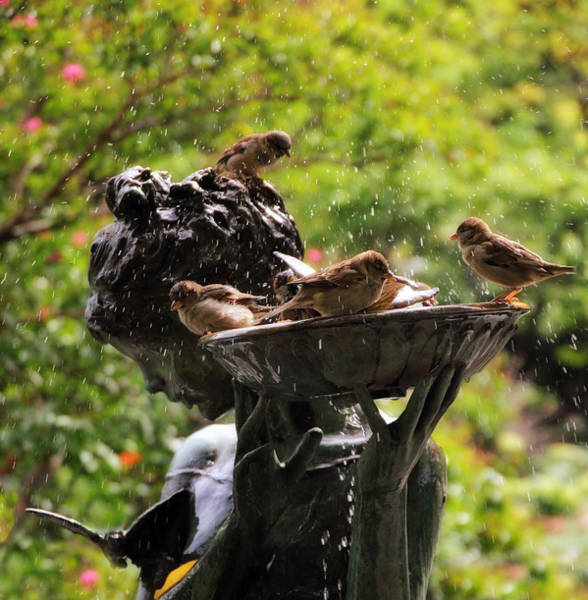 Photograph - Burnett Bird Bath by Jessica Jenney