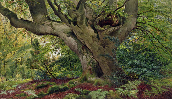Woods Drawing - Burnham Beeches by James Matthews