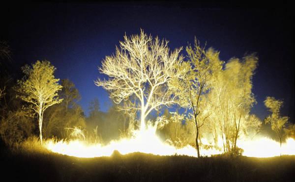 Furon Photograph - Burning Bush by Daniel Furon