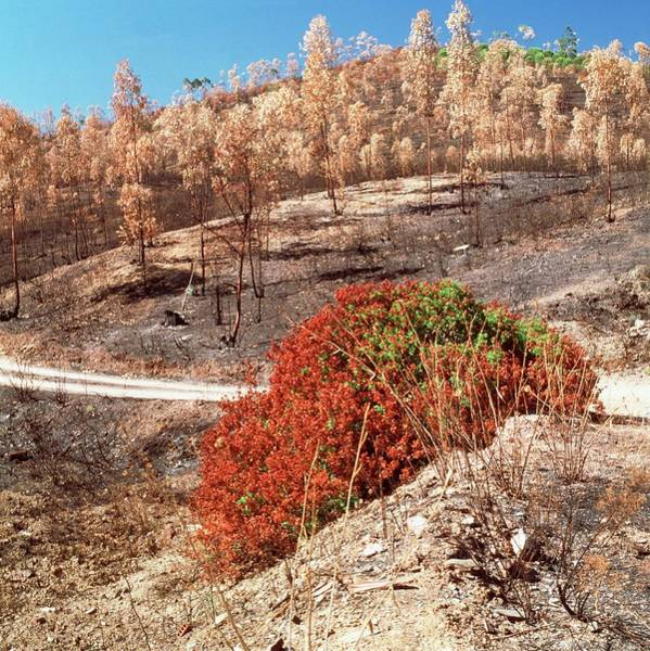 Wall Art - Photograph - Burnt Forest by Mark De Fraeye/science Photo Library