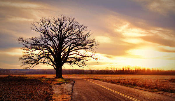 Oak Trees Photograph - Burr Oak Silhouette by Cricket Hackmann
