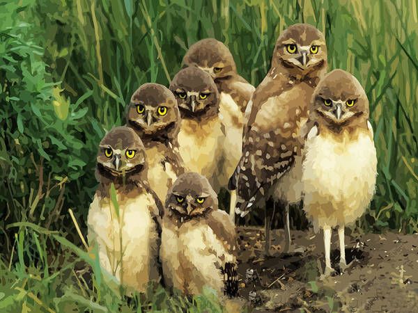 Burrowing Owl Painting - Burrowing Owl Chicks Group Portrait by Elaine Plesser