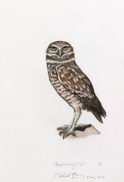 Burrowing Owl Painting - Burrowing Owl by Michael Earney