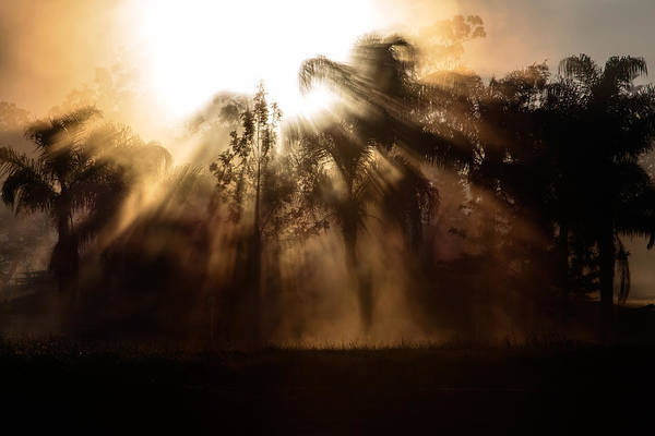 Photograph - Burst by Nicholas Blackwell