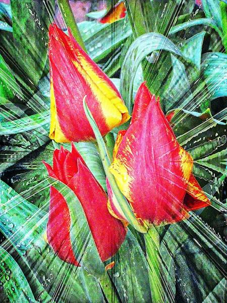 Wall Art - Photograph - Burst Of Color by Cathie Tyler