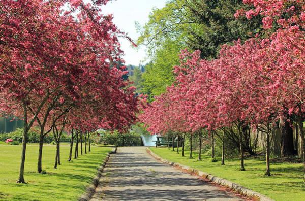 Photograph - Bursting With Spring by E Faithe Lester