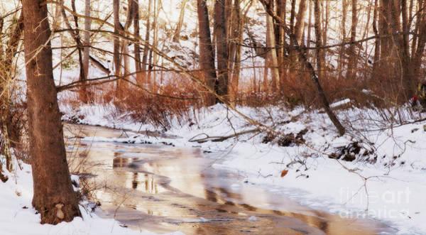 Photograph - Bush Cabin Run by Chris Scroggins