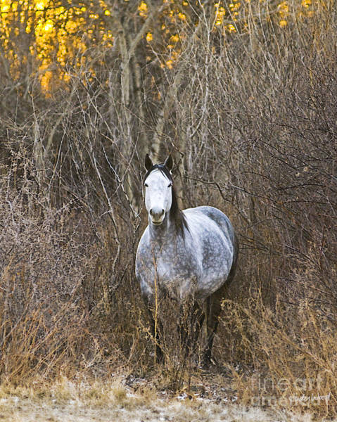 Dapple Digital Art - Bush Mare by Judy Wood