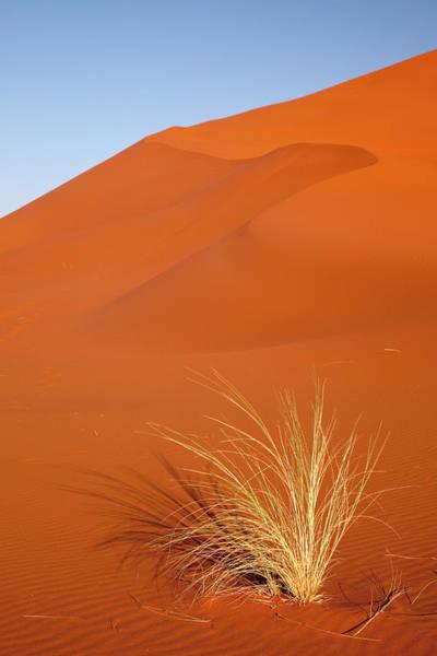 Wall Art - Photograph - Bushman's Grass And Reddish Sand Dune by Jaynes Gallery
