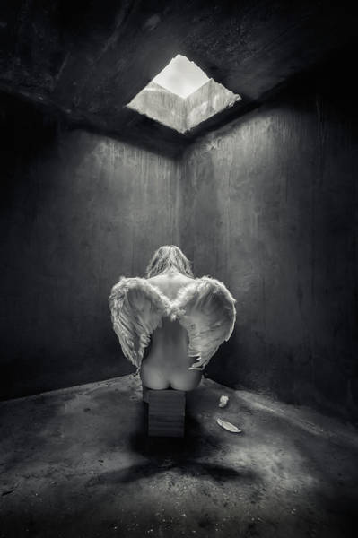 Traps Photograph - Busted by Petar Lupic