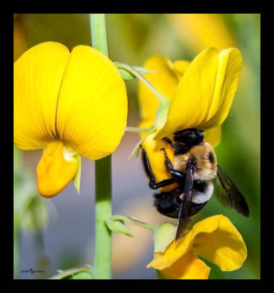 Wall Art - Photograph - Busy Bee 2 by Mechala Matthews