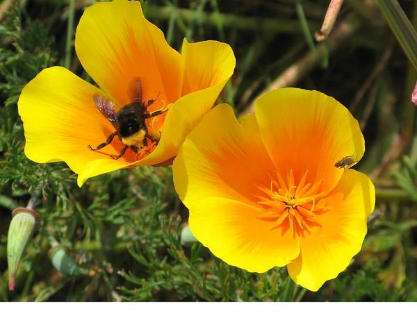 Busy Bee Art Print by Jill Bell