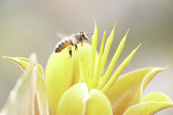 Photograph - Busy Bee by Luna Curran