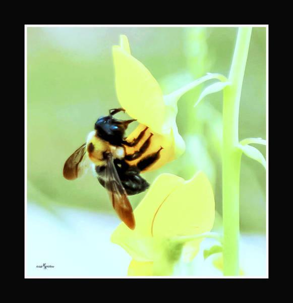 Wall Art - Photograph - Busy Bee by Mechala Matthews