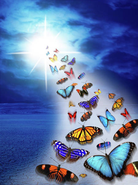 Wall Art - Photograph - Butterflies Flying To The Light Fantasy by Animal Images