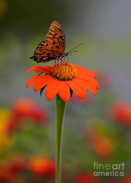Photograph - Butterflies Love Orange by Sabrina L Ryan