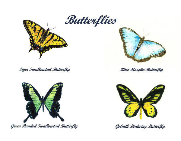 Wall Art - Painting - Butterflies by Michael Vigliotti