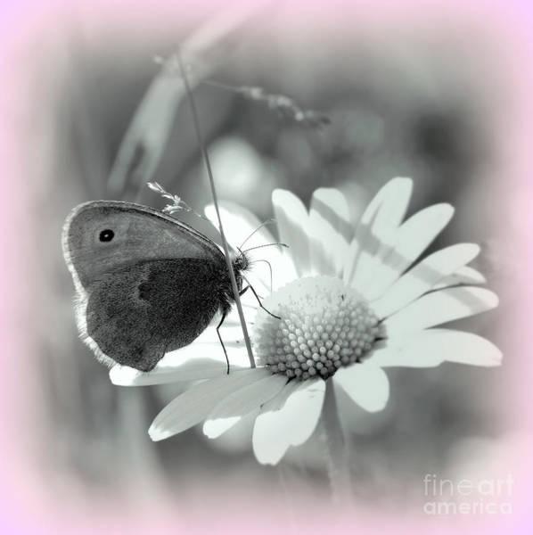 Wiese Digital Art - Butterfly                                                     by Vera  Laake