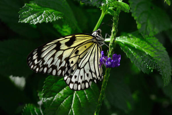 Photograph - Butterfly 10 by Dragan Kudjerski