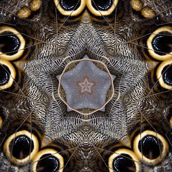 Photograph - Butterfly 28 by Natalie Rotman Cote