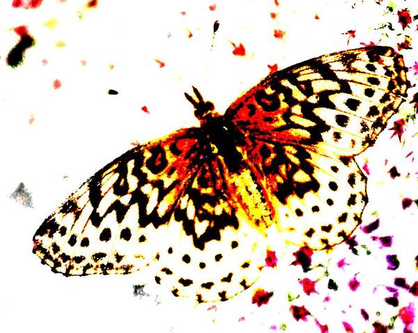 Digital Art - Butterfly 4 by John Feiser