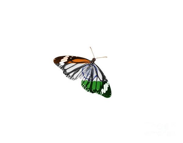 Indian Flag Butterflies: August 15 Photographs