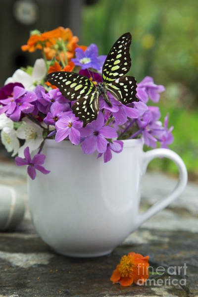 Cut Flower Photograph - Butterfly And Wildflowers by Edward Fielding