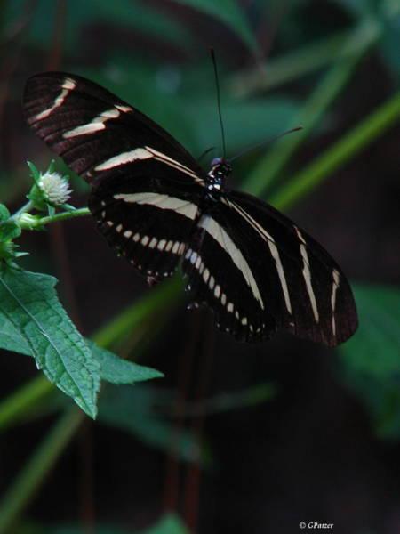 Patzer Photograph - Butterfly Art 2 by Greg Patzer