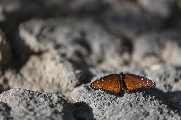 Photograph - Butterfly At Rest 1 by Scott Campbell